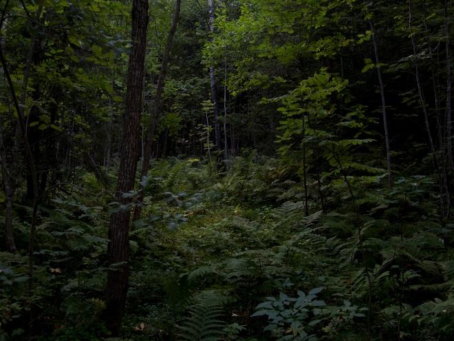 in the woods, darkly